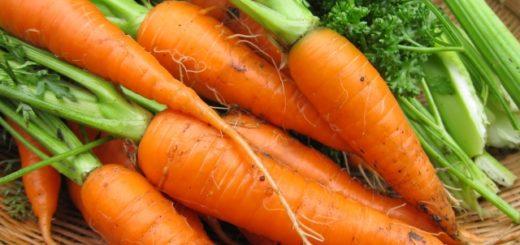 好きな野菜は人参