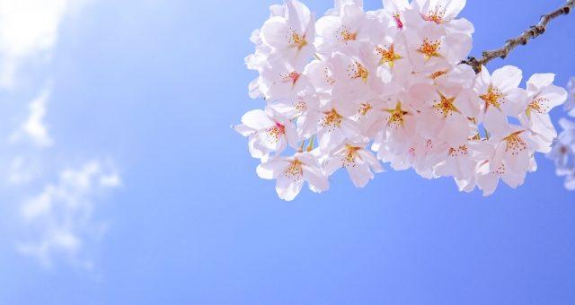 お花見とコロナウィルス